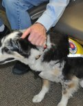Pet Therapy Teams Provide Comfort for Travelers